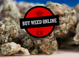 Find Cannabis Stores & Dispensaries Near Me - Budhub Canada