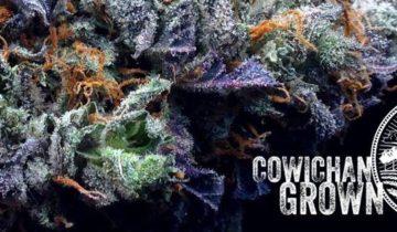 Warmland Medicinal Cannabis Centre