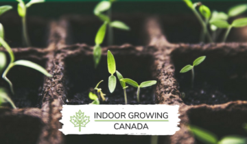 Indoor Growing Canada