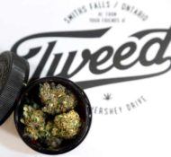 Tweed Cannabis Store – Albert Street, Regina