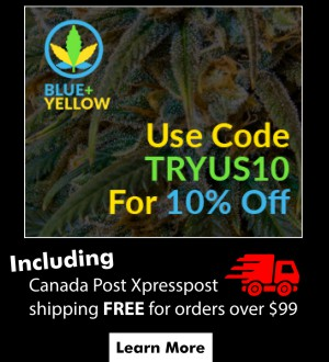 blue-yellow-online-cannabis-delivery