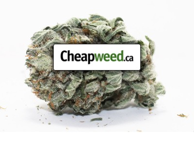 cheap-weed-canada-online-dispensary-feature-image