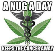 Scotia Green – Medical Marijuana Dispensary