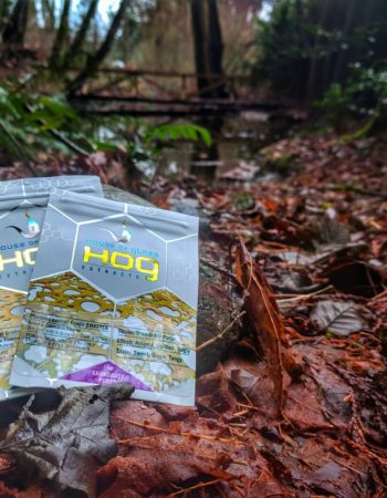 Hog-Extracts and House of Glass-Vancouver