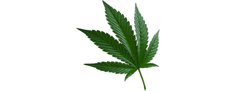 what is indica-cannabis-leaf