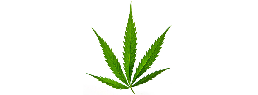what is sativa-cannabis-leaf