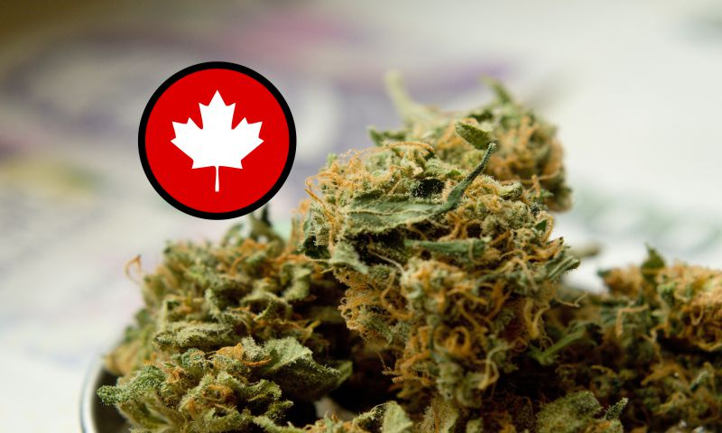 Wholesale-Bud-Canada–Best-Dispensaries-Wholesale-Weed-feature