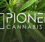 Pioneer Cannabis Co Burlington